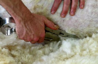 lana de ovejas