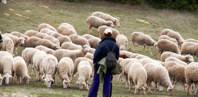 Pastores en Terradillos