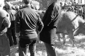 Tratantes de ganado