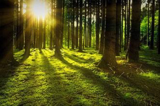 Dia Mundial de los bosques