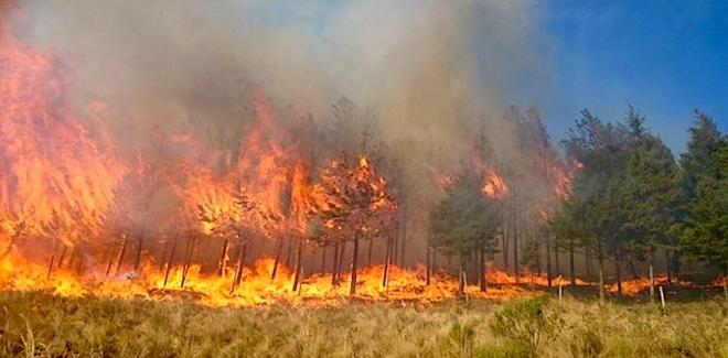 Incendio en bosques de Salamanca