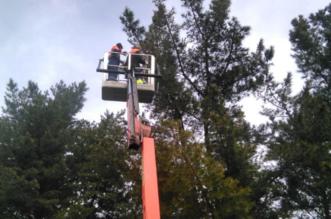 Mantenimiento de pinos