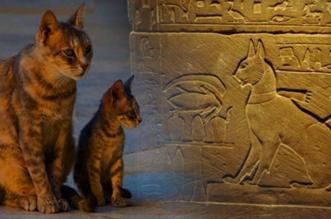 El gato en culturas del mundo - Salamanca